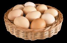 15-egg-png-image