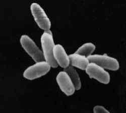 250px-halobacteria
